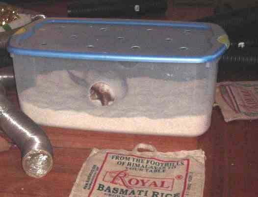 how to give ferrets antibiotics